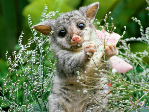 baby animals pictures. Baby Animals