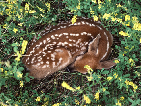 Cute Little Deer