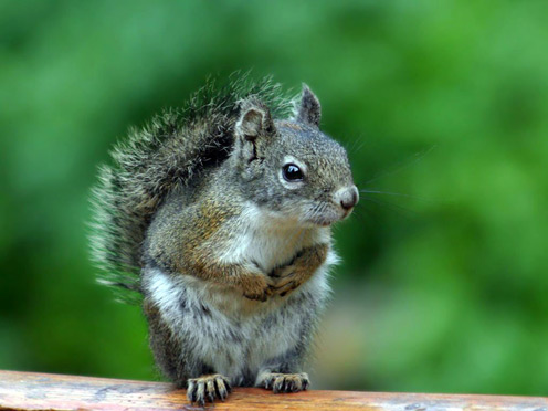 Thoughtful Squirrel