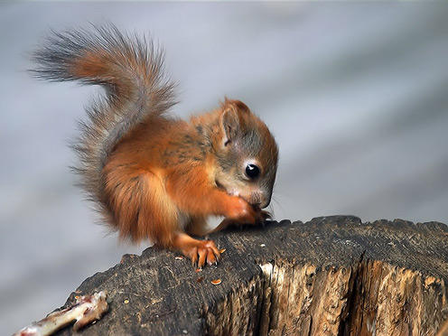 Very Cute Little Squirrel