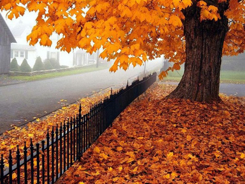 Nice Picture of Autumn