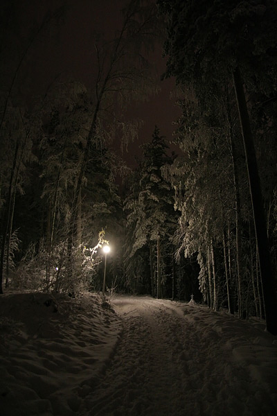 Snow-Covered Road in the Forest at Night