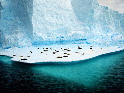 Penguins on Ice, Antarctica