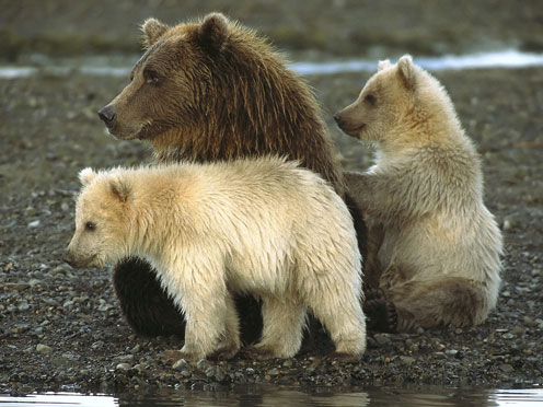 More Doglike Bears