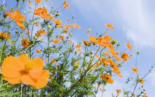 Field Orange Flowers