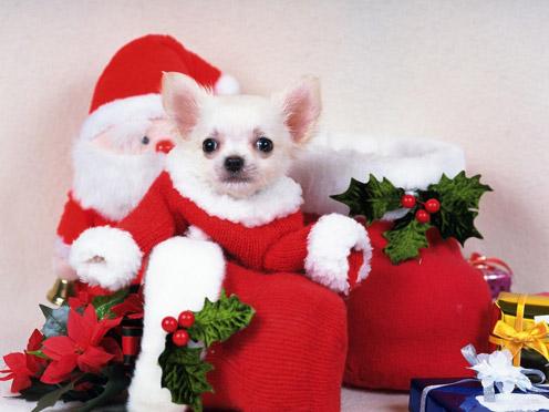 Christmas Puuppy