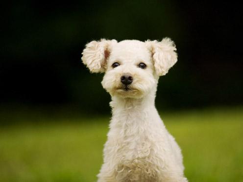 Cute Doggy