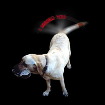 Dog with LED Dog Tale Communicator
