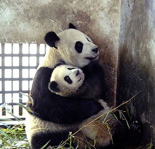 Panda Mom with Panda Son