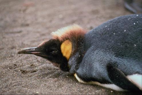 Lying Penguins