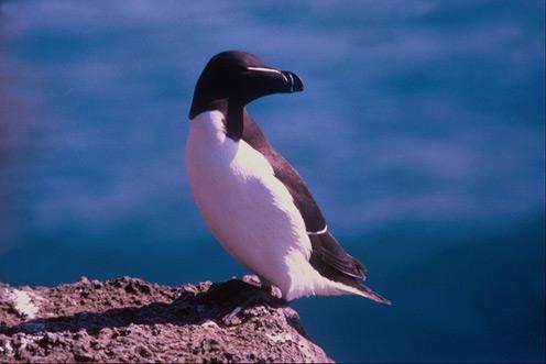 Penguin in the Sun