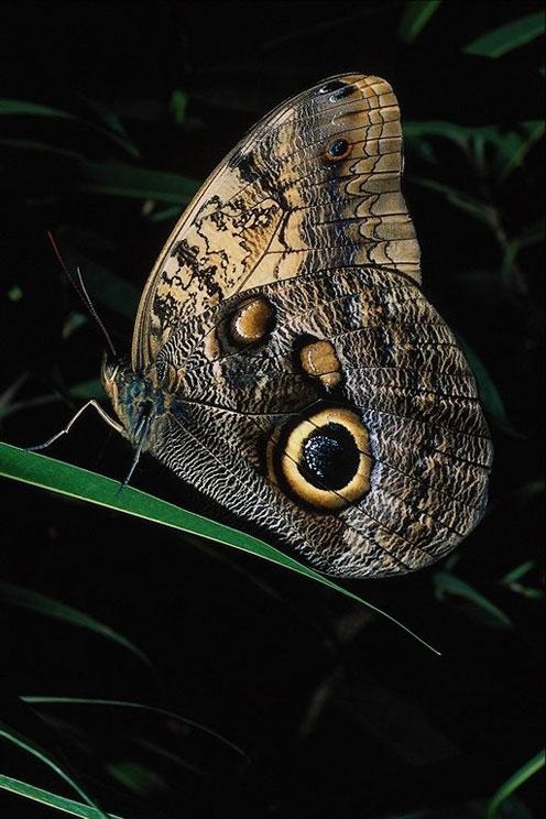 Very Beautiful Butterfly