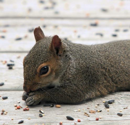 Squirrel's Face