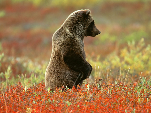 Cute Bear Standing in a Flower Field
