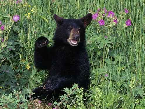 Bear Sitting in Flowers