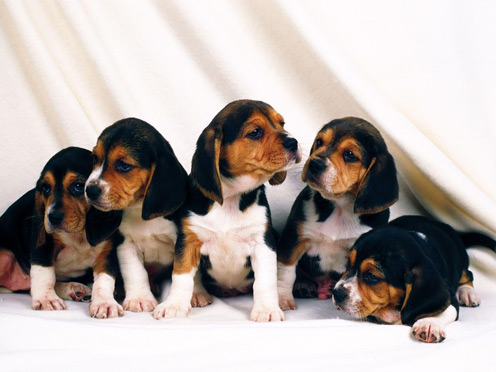 Many Cute puppies