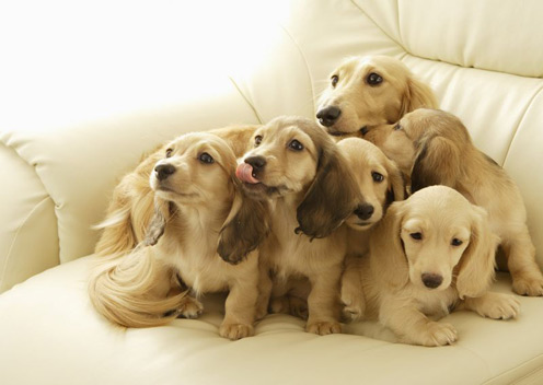 Many Nice Puppies