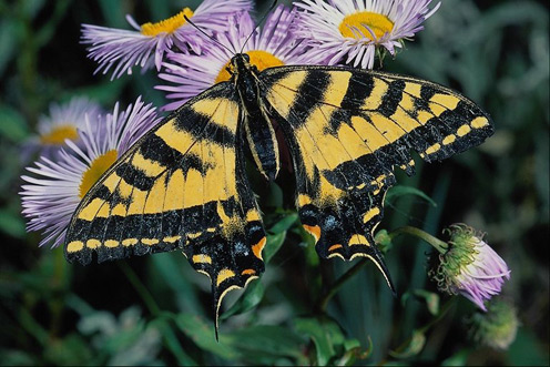 Butterfly over Flower