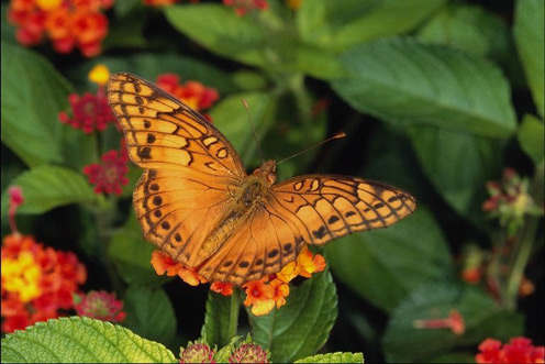 Extremely Beautiful Butterfly
