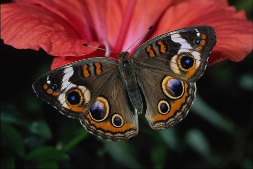 Red Flower, Beautiful Butterfly