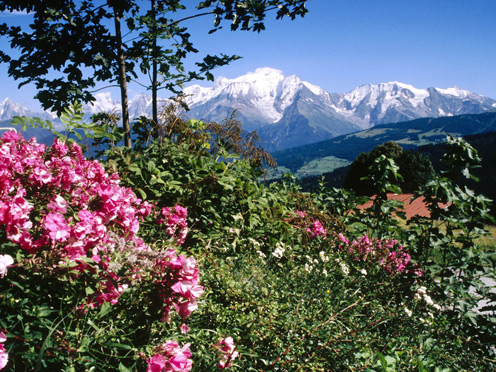 Flowers and Alps