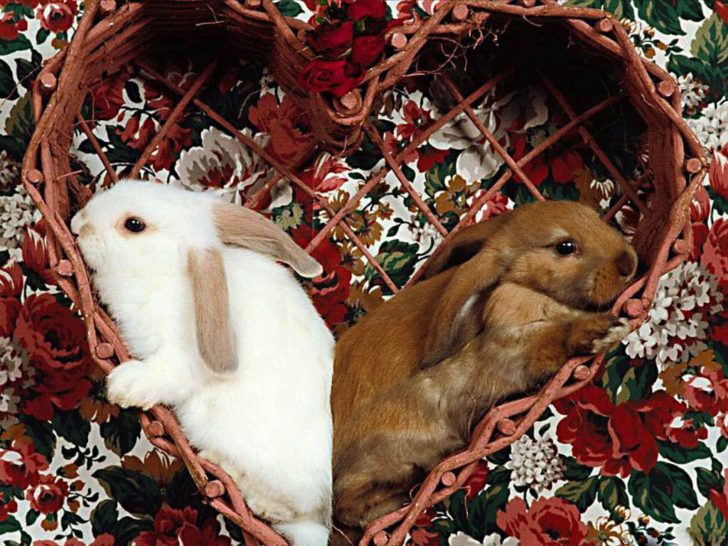 Heart-shaped Lop-eared Rabbits