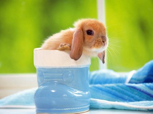 Cup Rabbit