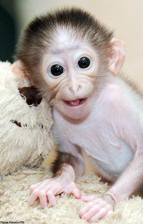 Happy Monkey Conchita and Her Teddy Bear
