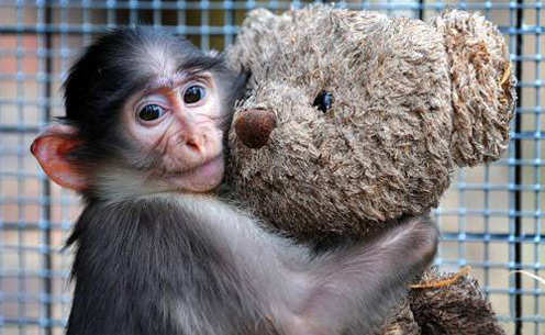 Cute Monkey Conchita and Her Teddy Bear