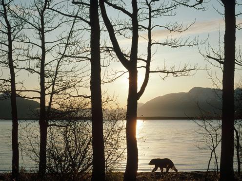 Naknek Lake Katmai Nationa