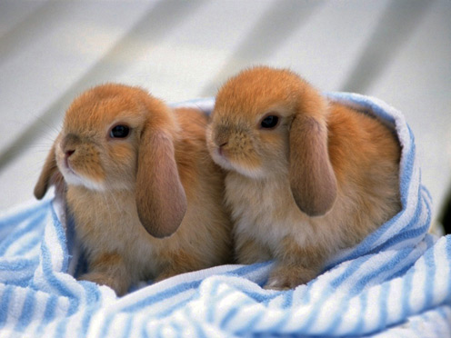 2 Little Rabbits