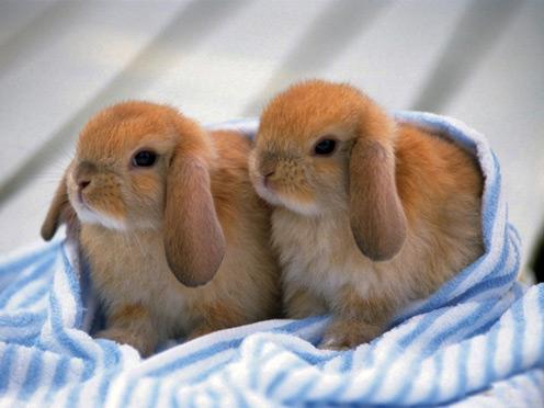 2 Little Rabbits