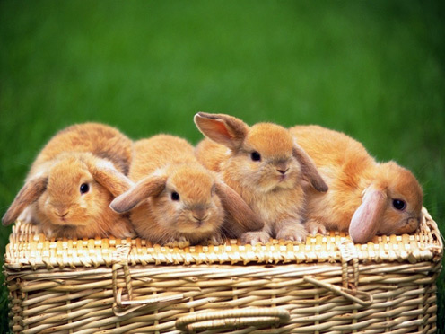 Rabbit Party