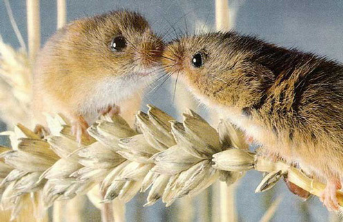 Pictures of Small Animals in Love