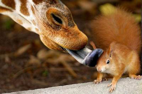 Photos of Squirrels in Love