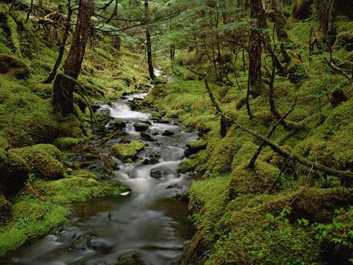 Temperate Rainforest Cordo