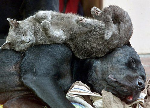 Funny Sleeping Cat and Dog
