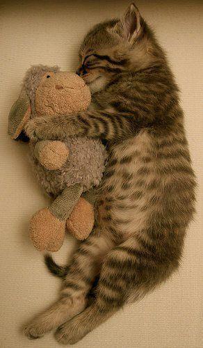 Funny Sleeping Cat