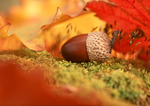 Awesome Autumn Pictures