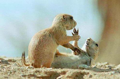Playing Groundhogs