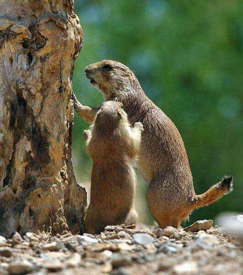 Playing Groundhogs