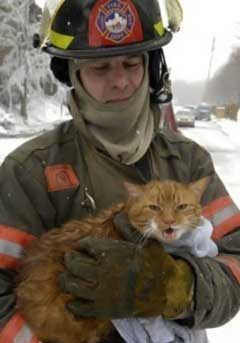 Saving Cats