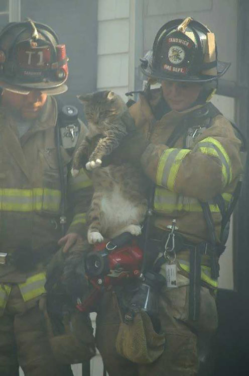 Saved Kitty in Smoke