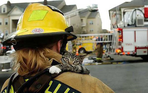 Cute Saved Kitty