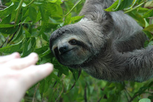 Sloth and Hand