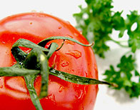 Vegetarianism Harms the Brain