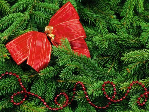 Christmas Tree - Macro