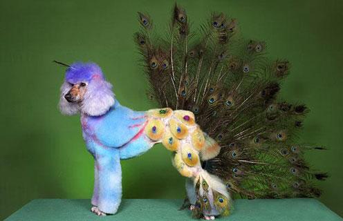 Peacock Cindy