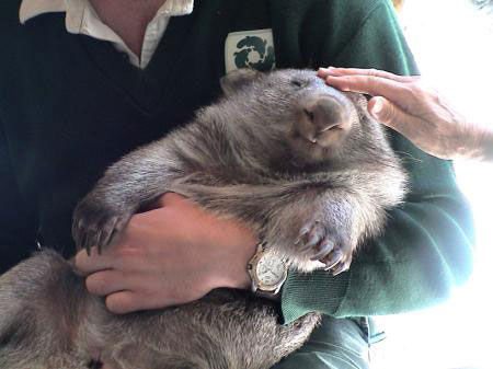 Wombat and Zookeepers