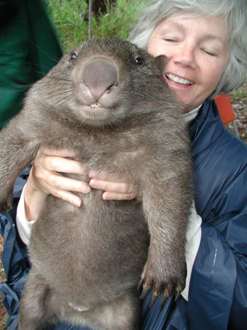 Smiling Wombat